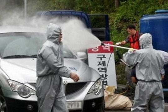 """韩国口蹄疫蔓延 国产与进口牛肉""""冰火两重天"""""""