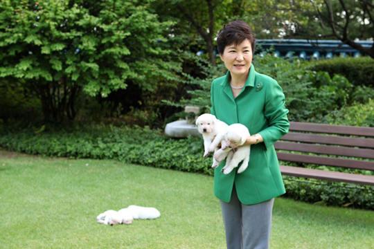 朴槿惠被告涉嫌虐待动物 搬离青瓦台时遗弃9只宠物狗