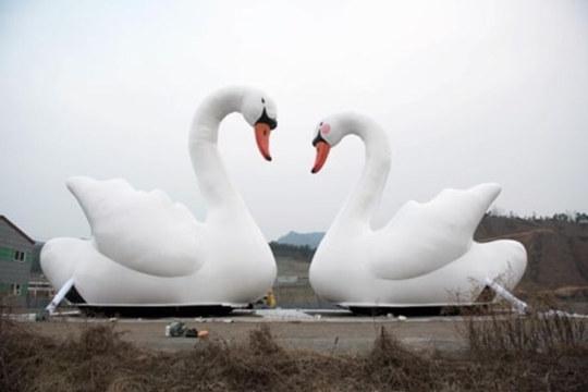 """石村湖""""甜蜜的天鹅""""大型作品展"""