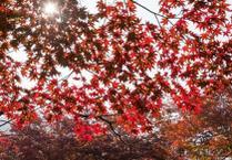 秋天就要到了, 韩国走起吧!