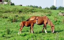 濟州島短腿馬體驗公園一日游