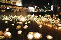 东大门设计广场LED玫瑰花园灯光展