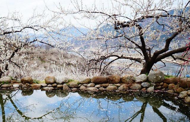 三月份韩国最佳旅行地推荐