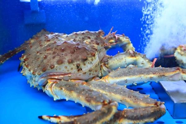 饕餮美食 人气商家 最棒帝王蟹专卖店   济州岛海鲜物产丰富多样,常见