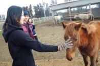 短腿馬體驗公園