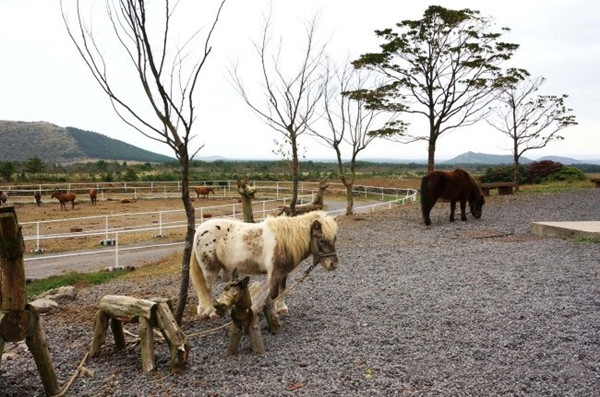 短腿马体验公园