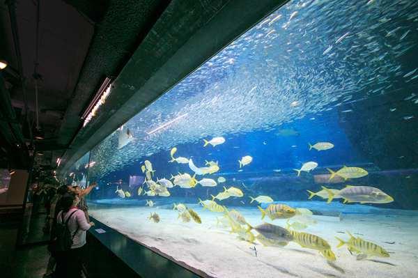 COEX AQUARIUM水族馆