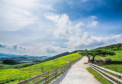 赏樱、牧羊、周游世界——韩国镜浦台樱花+大关岭羊群牧场一日游