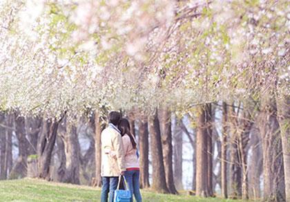 落入人间的伊甸园——韩国南怡岛+晨静树木园一日游