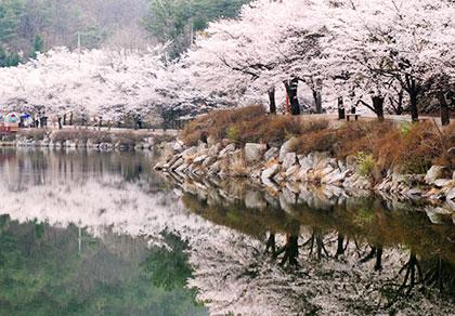 马耳山樱花+全州韩屋村一日游