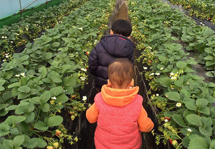 首尔↔南怡岛+小法国村+草莓农场 接送专车