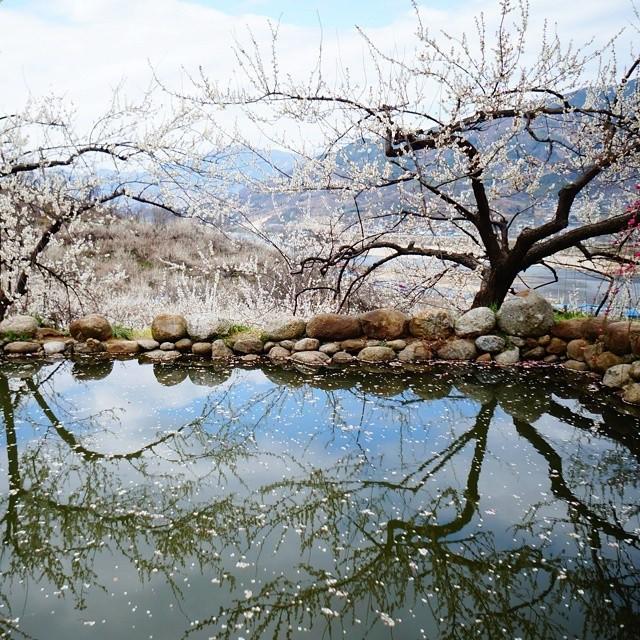 3月韩国国内最佳旅行地推荐